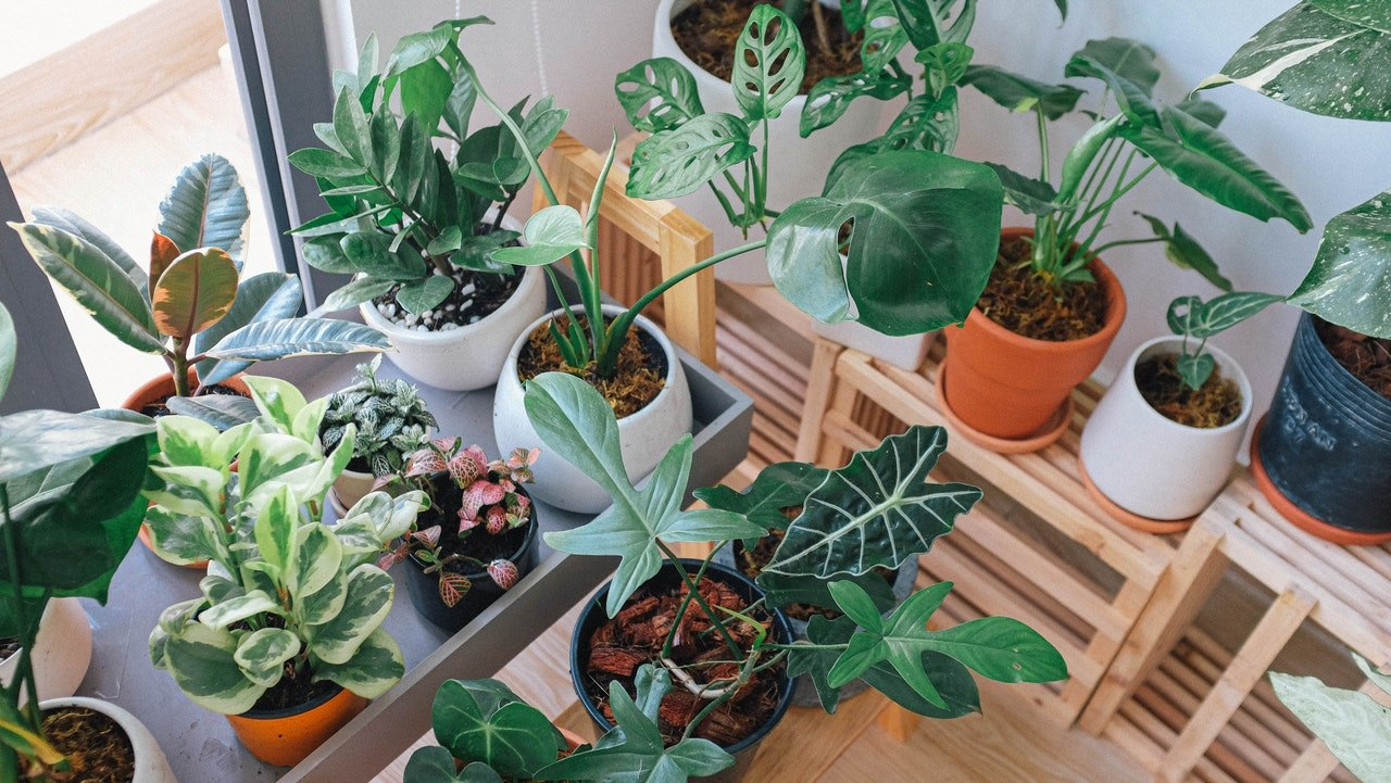 App to Learn How to Care for Plants: See How to Download Vera for Free