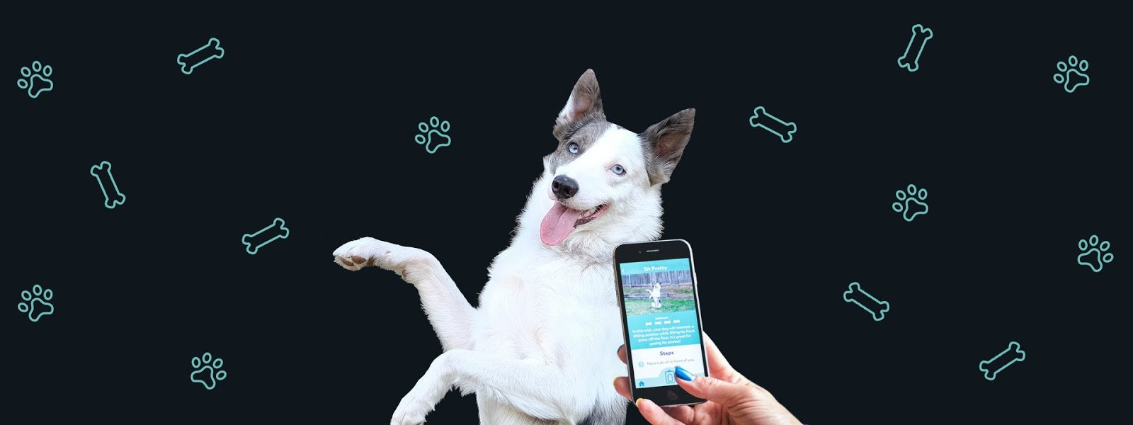 Mobile Dog Training App: Check Out Puppr
